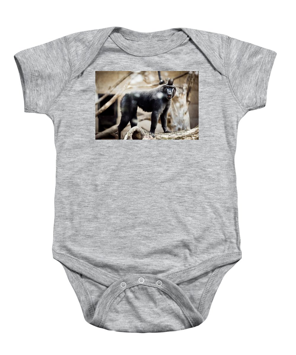 Macaque Baby Onesie featuring the photograph Single Macaque Monkey Standing by Arletta Cwalina