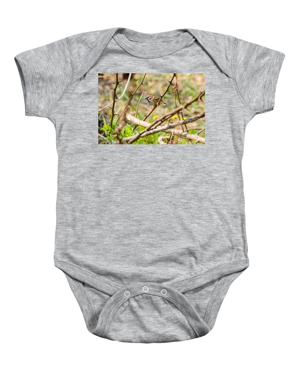 Animal Baby Onesie featuring the photograph Sparrow In The Thorns by Alain De Maximy