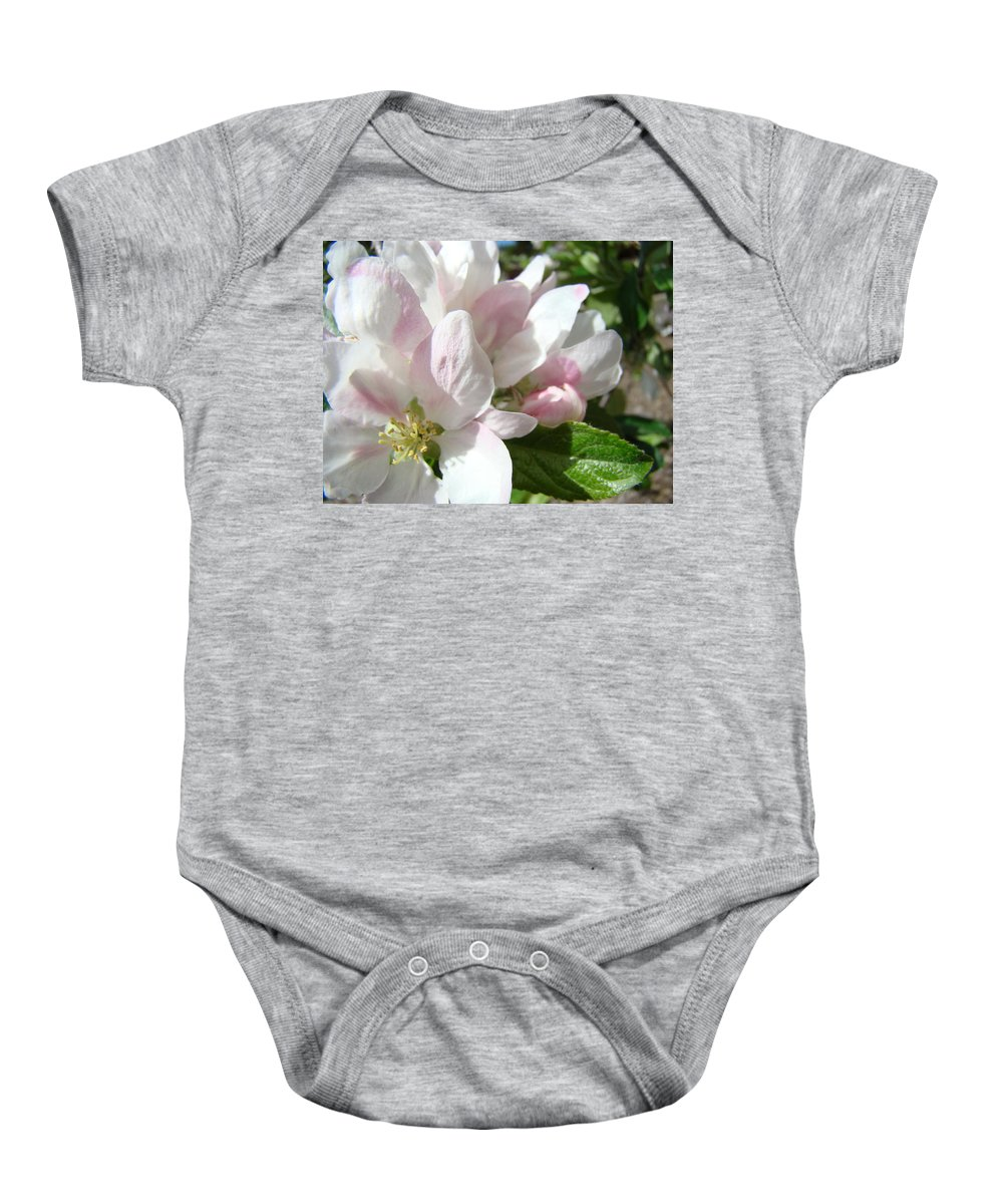 Apple Baby Onesie featuring the photograph Spring Apple Blossoms Art Prints Apple Tree Baslee Troutman by Baslee Troutman