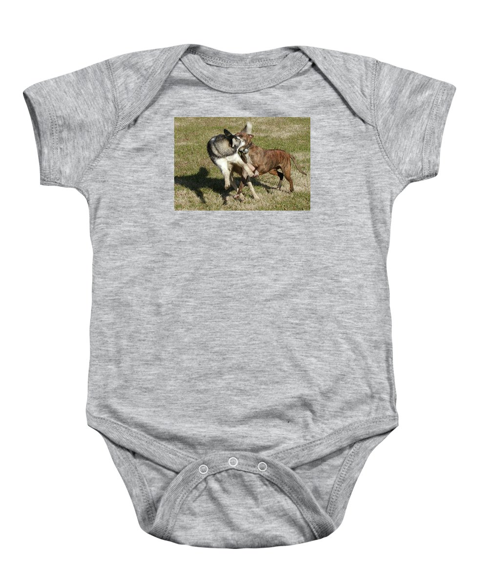 Husky Baby Onesie featuring the photograph State Employees On Break by Paul Shefferly