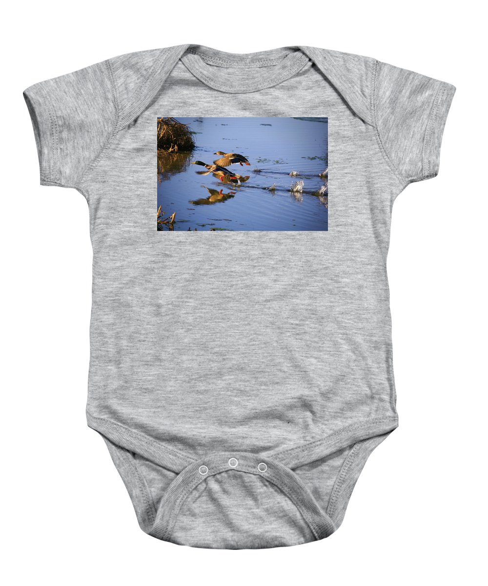 Duck Baby Onesie featuring the photograph Take Off by Robert Pearson
