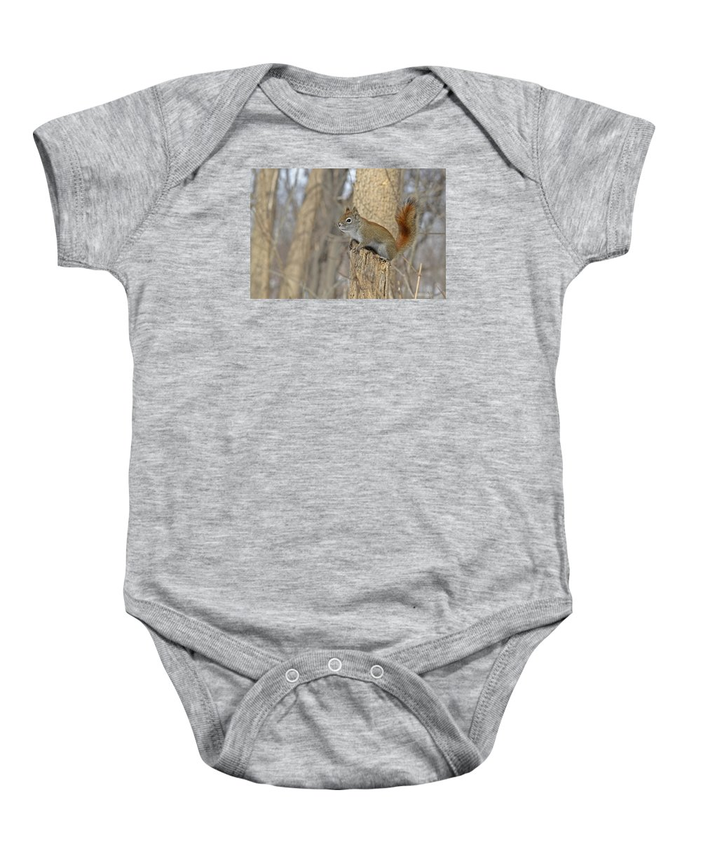 American Red Squirrel Baby Onesie featuring the photograph The American Red Squirrel by Asbed Iskedjian