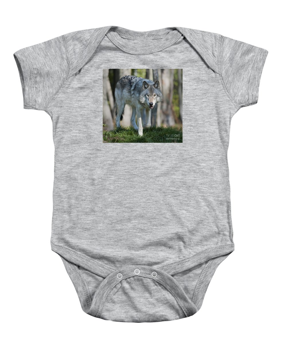 Nina Stavlund Baby Onesie featuring the photograph The Gray King... by Nina Stavlund