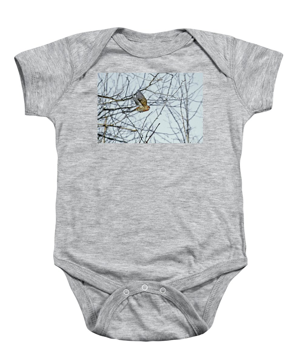 House Finch Baby Onesie featuring the photograph The House Finch In-flight by Asbed Iskedjian