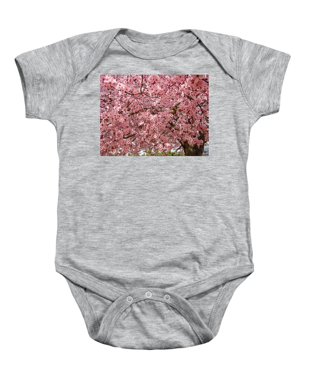 Tree Baby Onesie featuring the photograph Tree Blossoms Pink Blossoms Art Prints Giclee Flower Landscape Artwork by Baslee Troutman