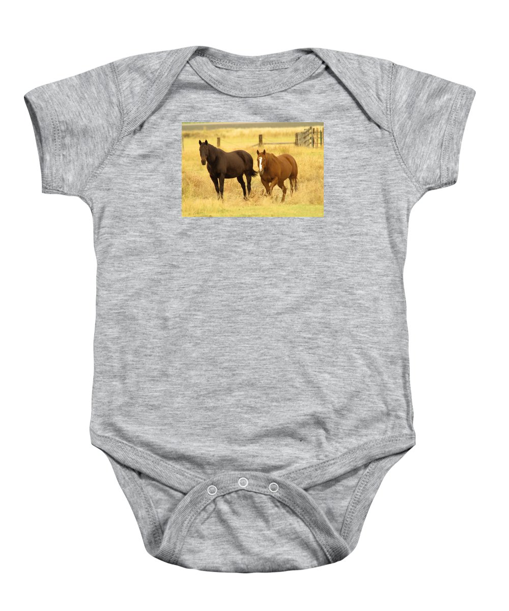 Horses Baby Onesie featuring the photograph Two Horses In A Field by Jeff Swan