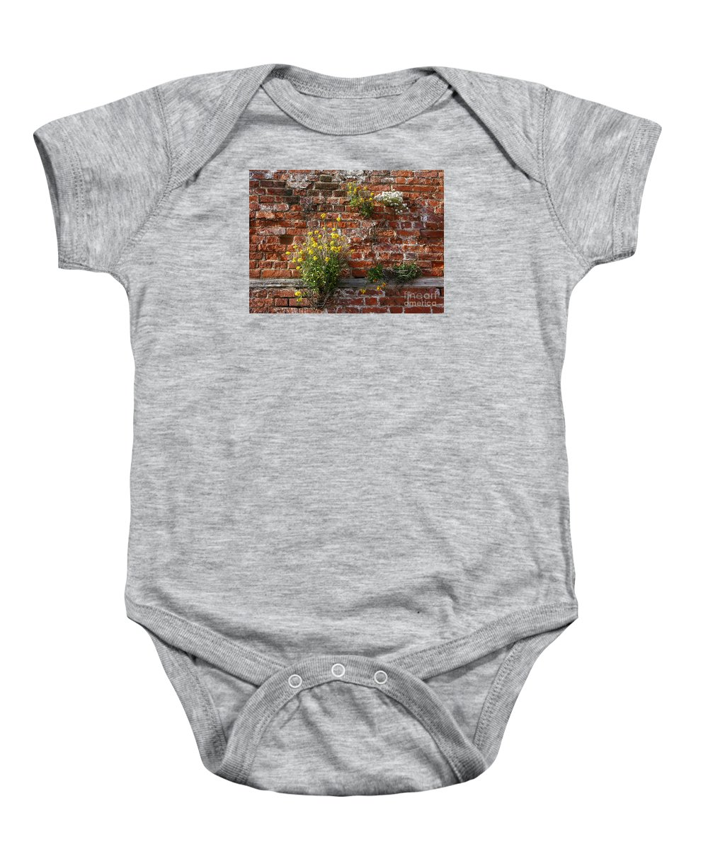 Wallflowers Baby Onesie featuring the photograph Wall Flowers by Ann Horn