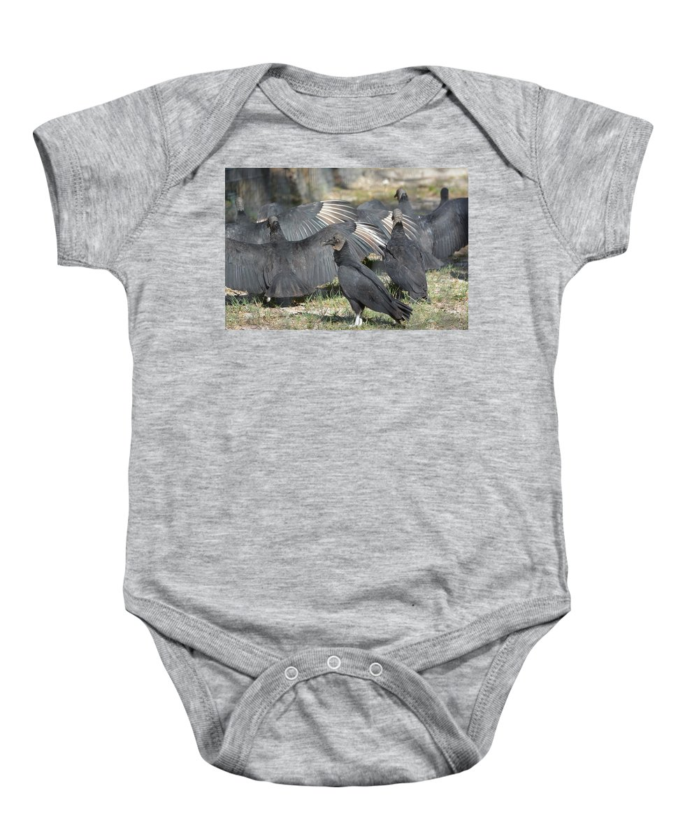 Black Vulture Coragyps Atratus Animal Wildlife Bird Nature Scavangers Carrion Feeders Wings Spread Don Columbus Photography Naples Florida Baby Onesie featuring the photograph What Are They Hiding From Me by Don Columbus