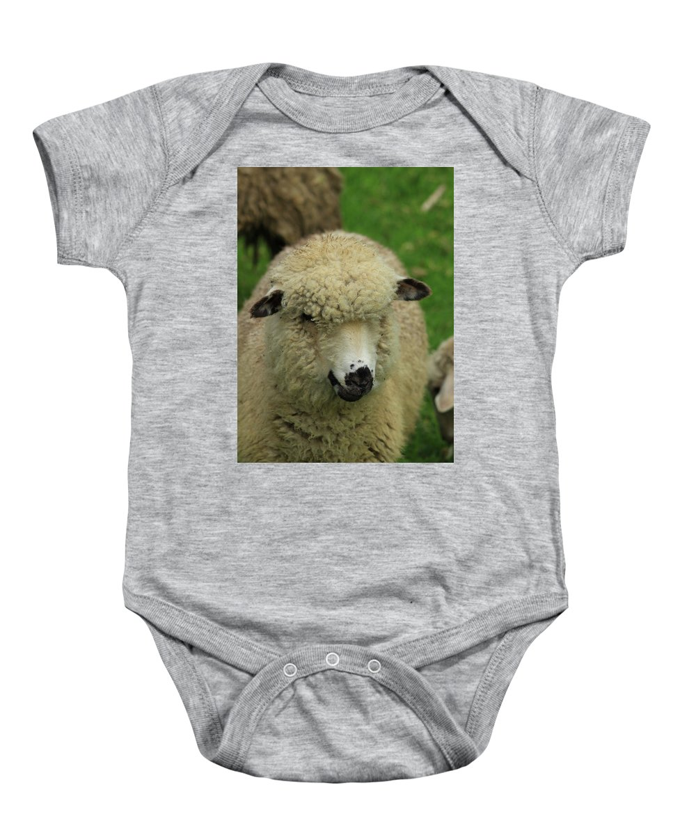 Sheep Baby Onesie featuring the photograph White Sheep by Robert Hamm