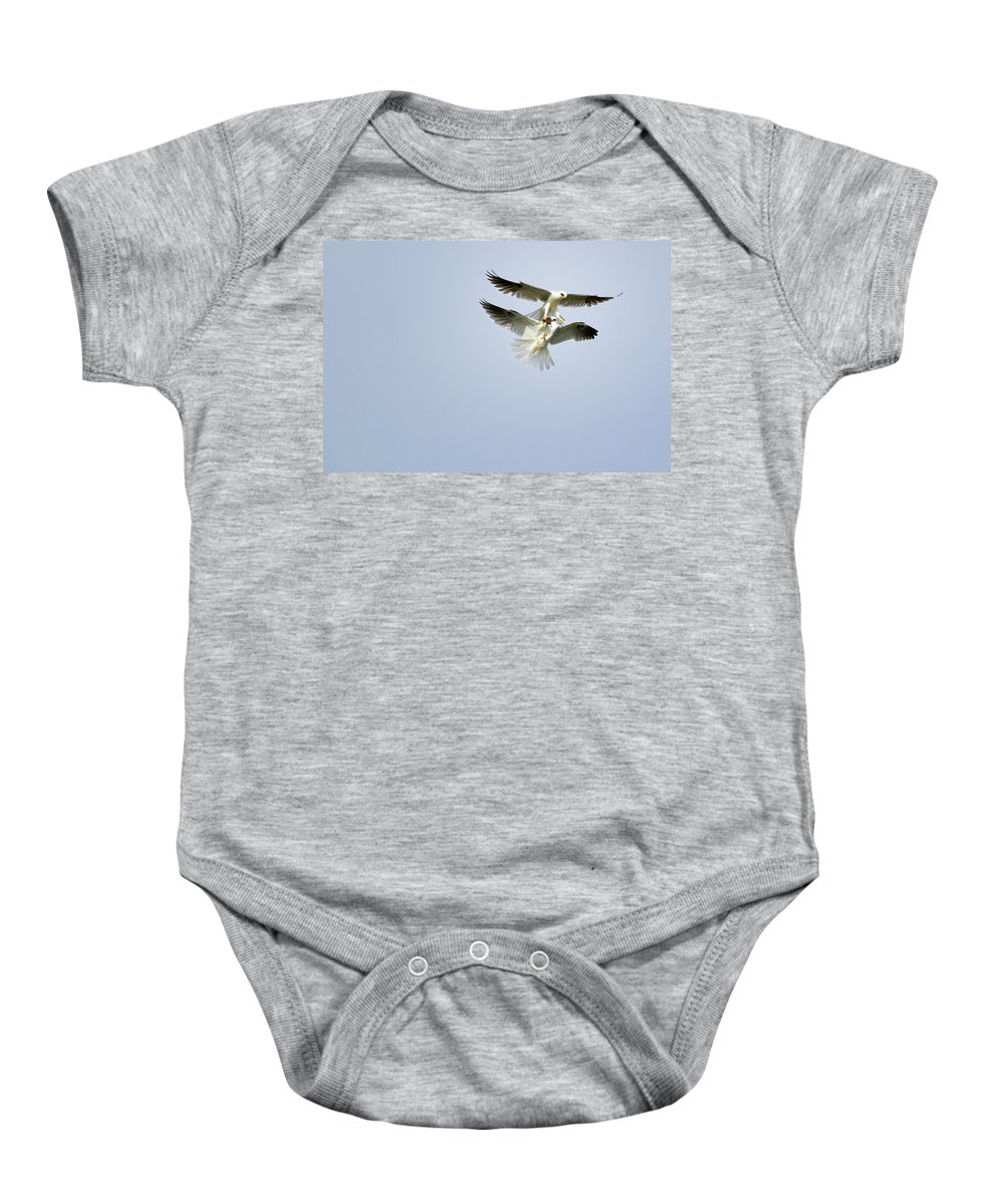 White-tailed Kites Baby Onesie featuring the photograph White-tailed Kites Food Exchange by Susan Gary