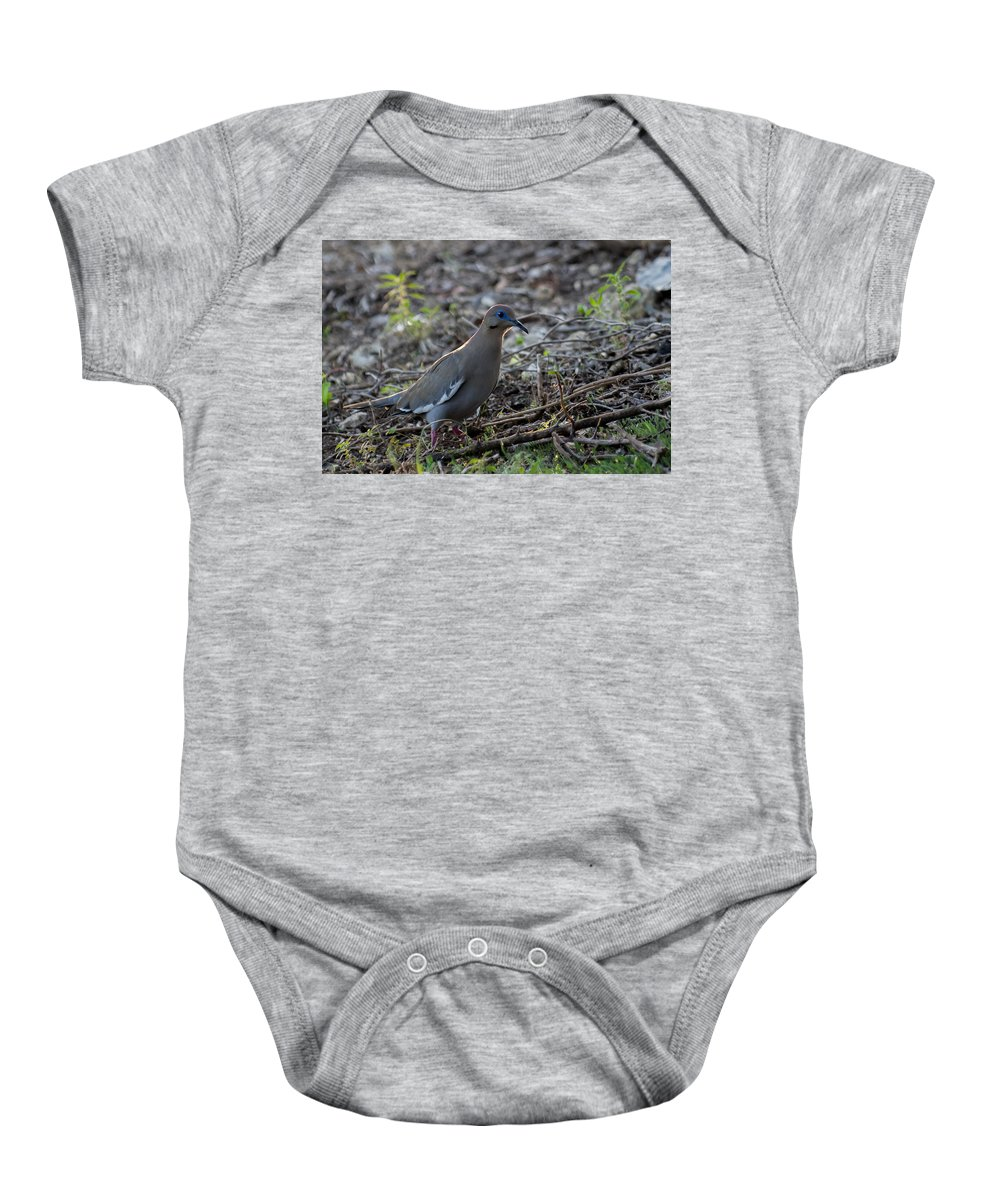 White Winged Dove Baby Onesie featuring the photograph White Winged Dove by Bob Marquis
