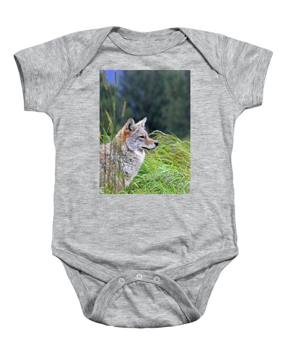 Coyote Baby Onesie featuring the photograph Wiley by Ty Rouse Wild Images