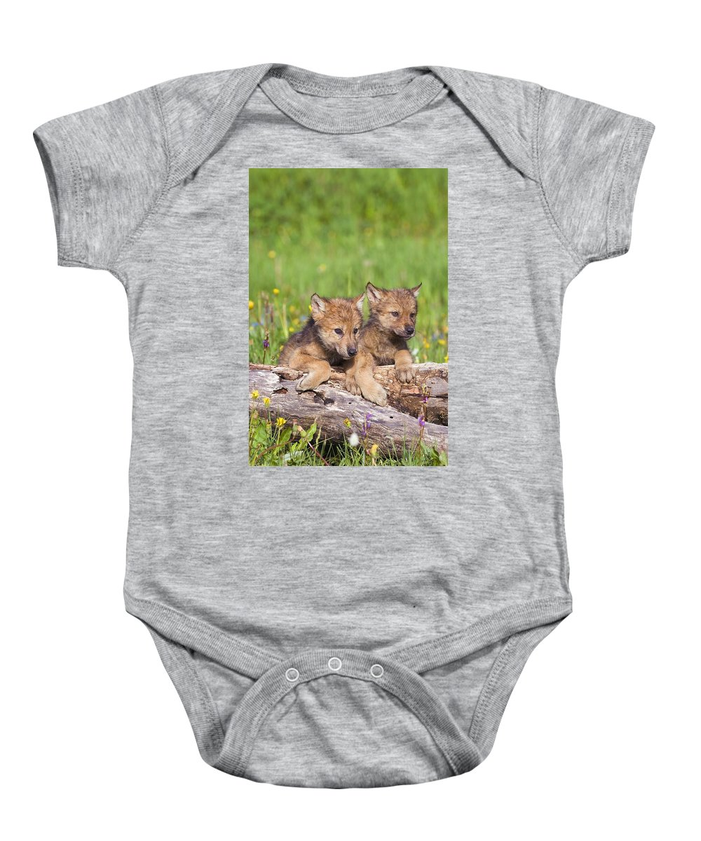 Animal Baby Onesie featuring the photograph Wolf Cubs On Log by John Pitcher