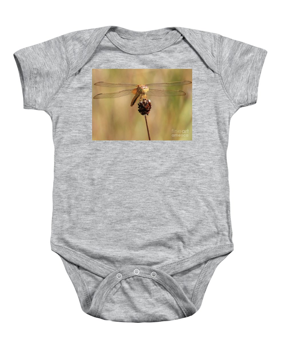 Dragonfly Baby Onesie featuring the photograph Yellow Dragonfly by Carol Groenen