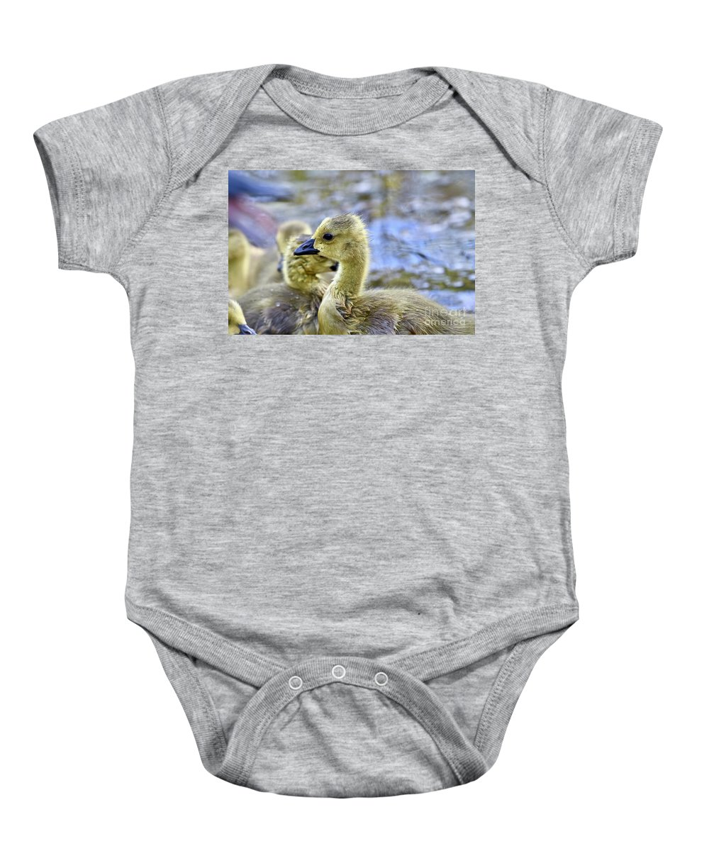 Adorable Baby Onesie featuring the photograph Young Canadain Goose by Jeramey Lende