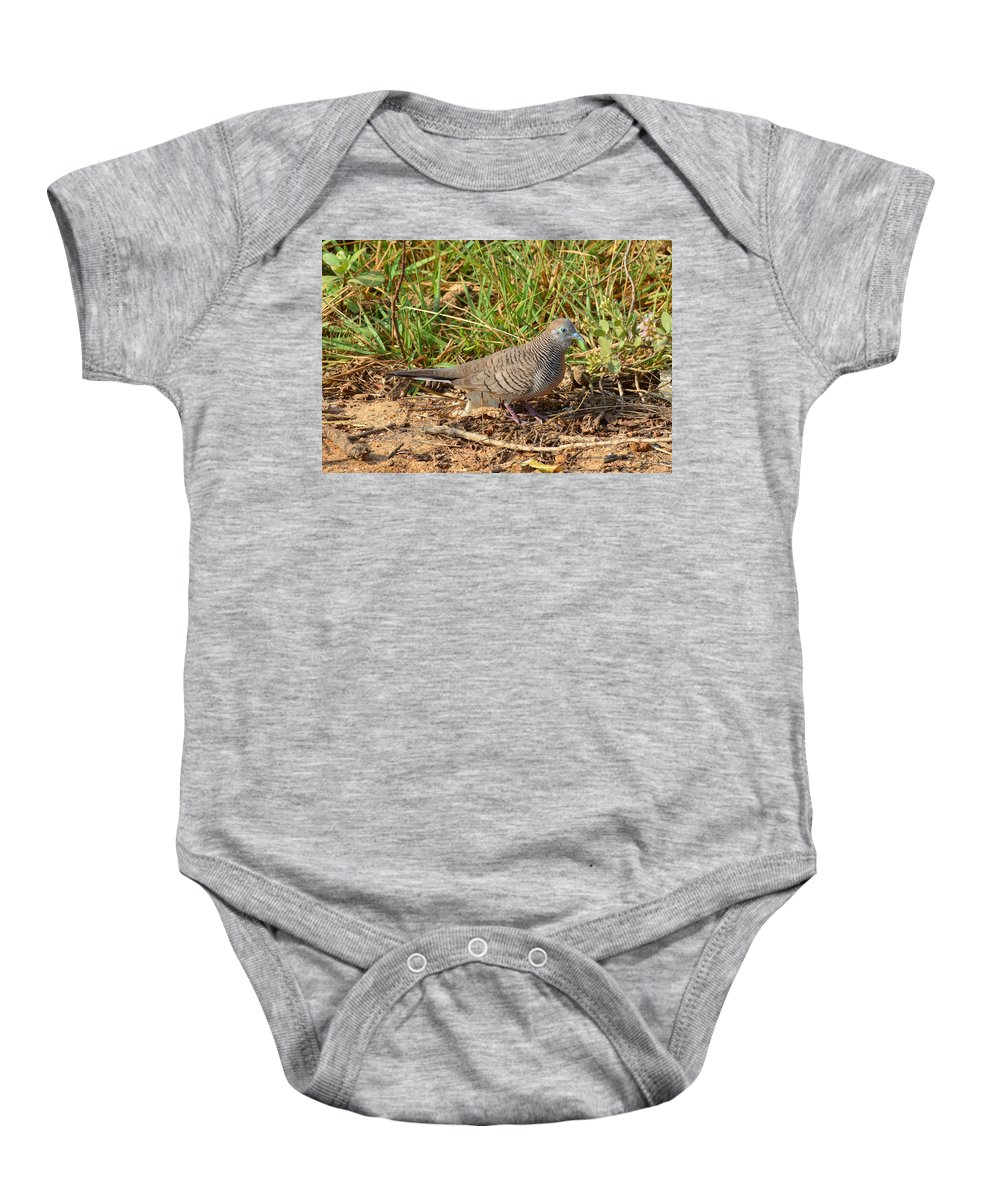 Zebra Dove Baby Onesie featuring the photograph Zebra Dove by David Hohmann