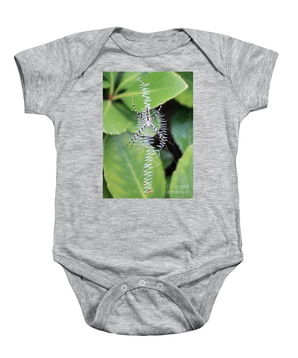 Spider Baby Onesie featuring the photograph Zipper Spider by Carol Groenen