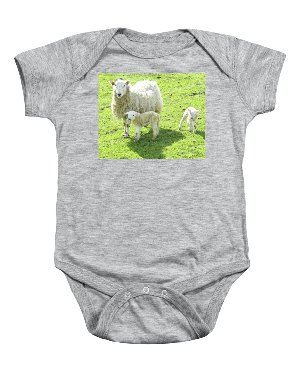 Ewe Baby Onesie featuring the photograph Ewe With Lambs by Victor Lord Denovan
