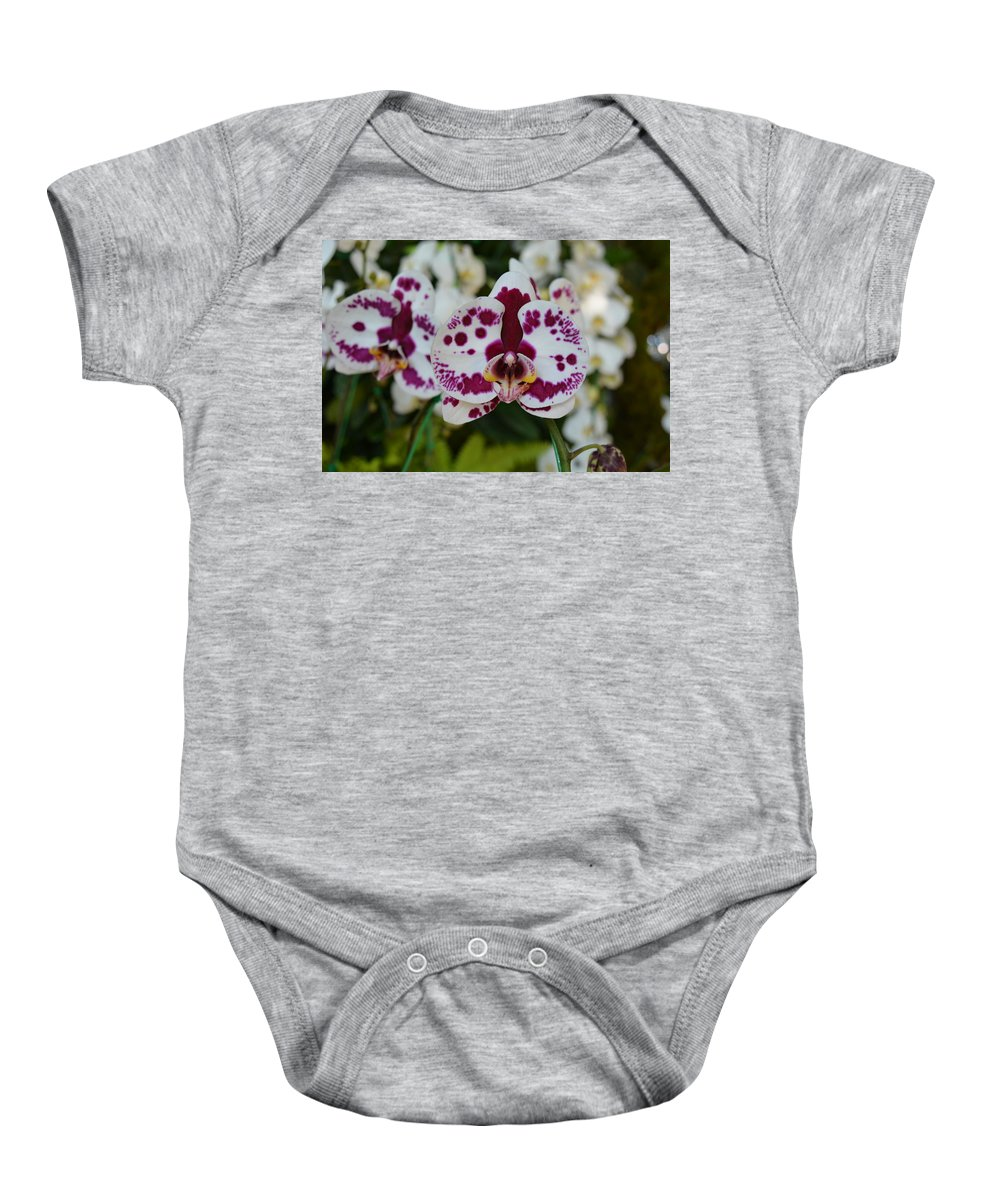 Orchid Baby Onesie featuring the photograph Portrait Of An Orchid by Elizabeth Vaughn