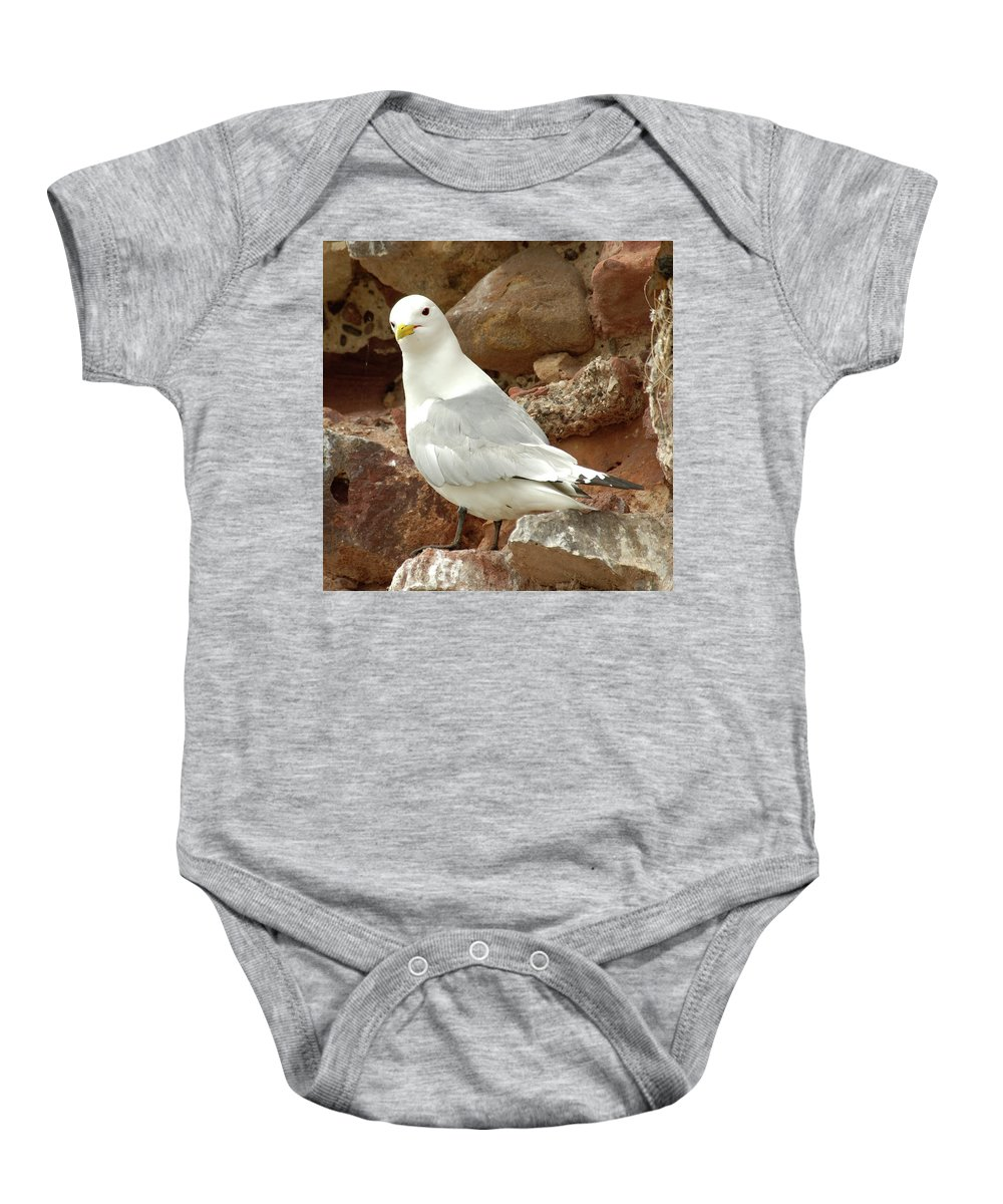 Seagull Baby Onesie featuring the photograph Seagull On Rock by Victor Lord Denovan