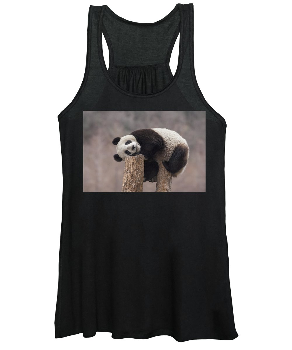 Katherine Feng Women's Tank Top featuring the photograph Giant Panda Cub Wolong National Nature by Katherine Feng