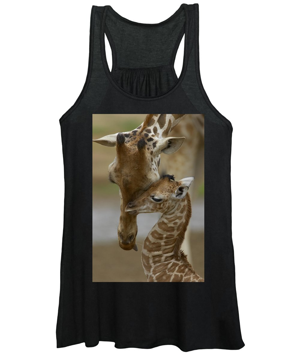 00119300 Women's Tank Top featuring the photograph Rothschild Giraffes Nuzzling by San Diego Zoo