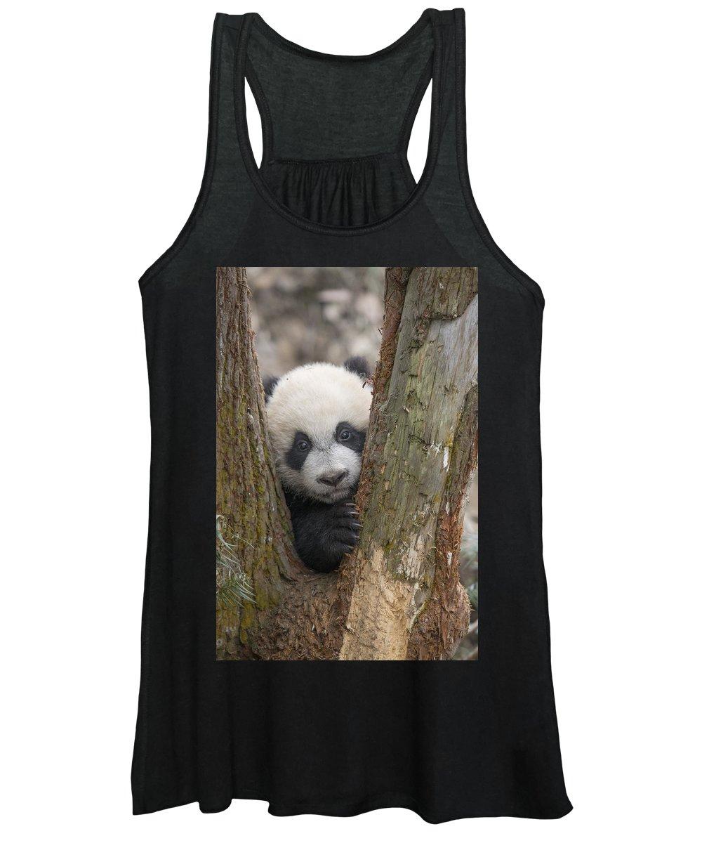 Katherine Feng Women's Tank Top featuring the photograph Giant Panda Cub Bifengxia Panda Base by Katherine Feng
