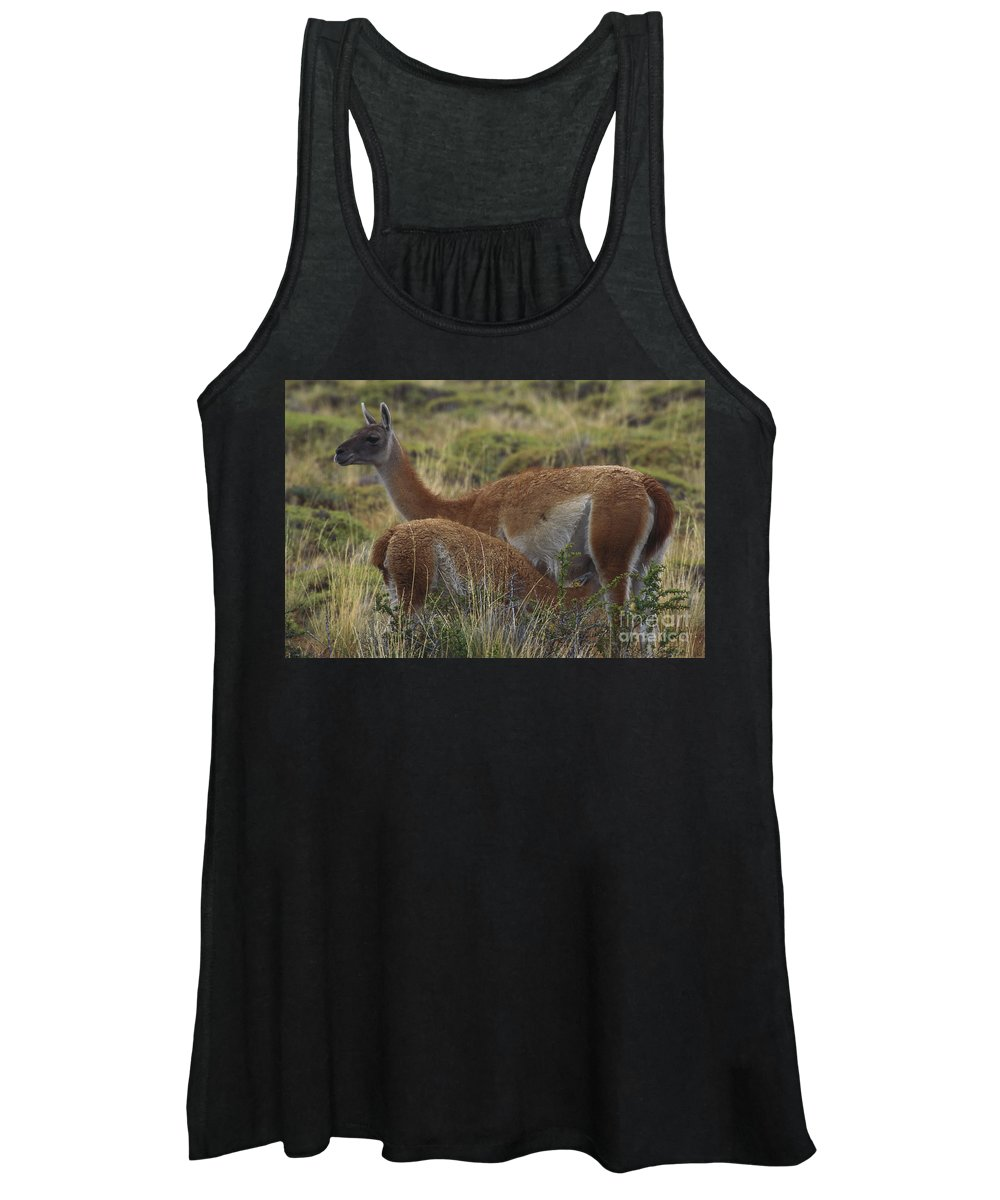 Outdoors Women's Tank Top featuring the photograph Guanaco by Art Wolfe