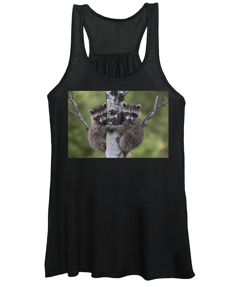 00176520 Women's Tank Top featuring the photograph Raccoon Two Babies Climbing Tree North by Tim Fitzharris