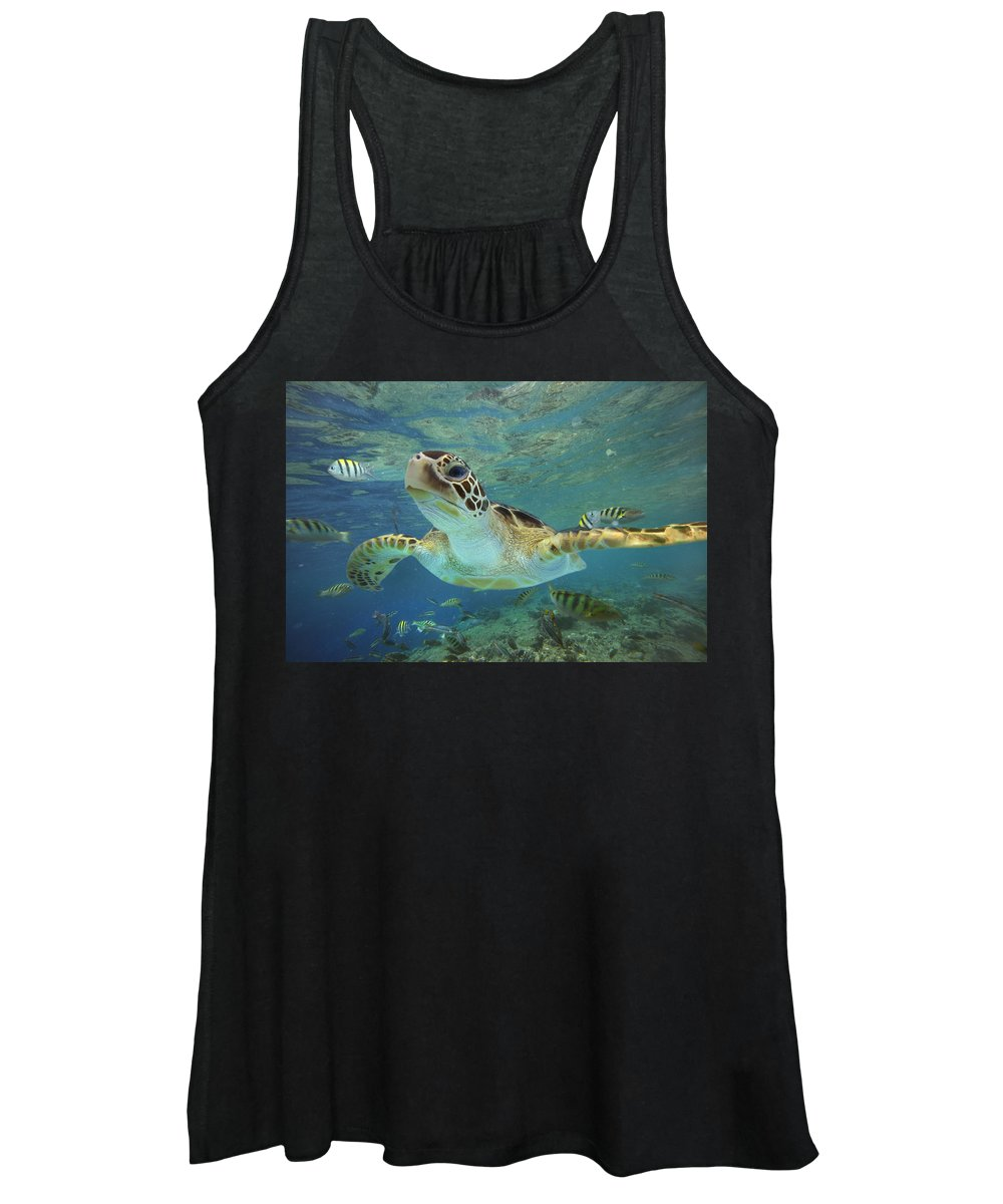 Mp Women's Tank Top featuring the photograph Green Sea Turtle Chelonia Mydas by Tim Fitzharris