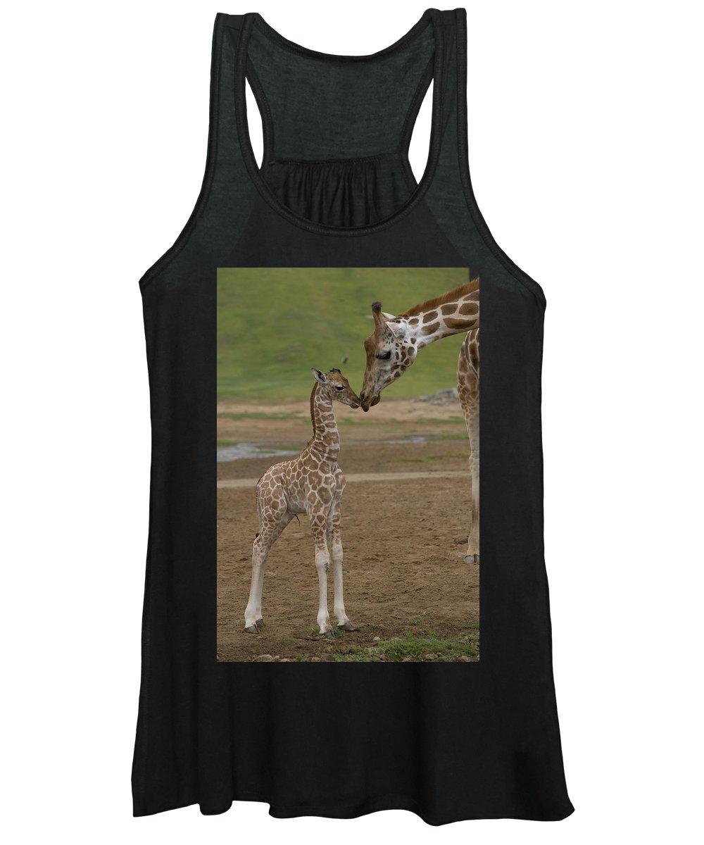 Mp Women's Tank Top featuring the photograph Rothschild Giraffe Giraffa by San Diego Zoo