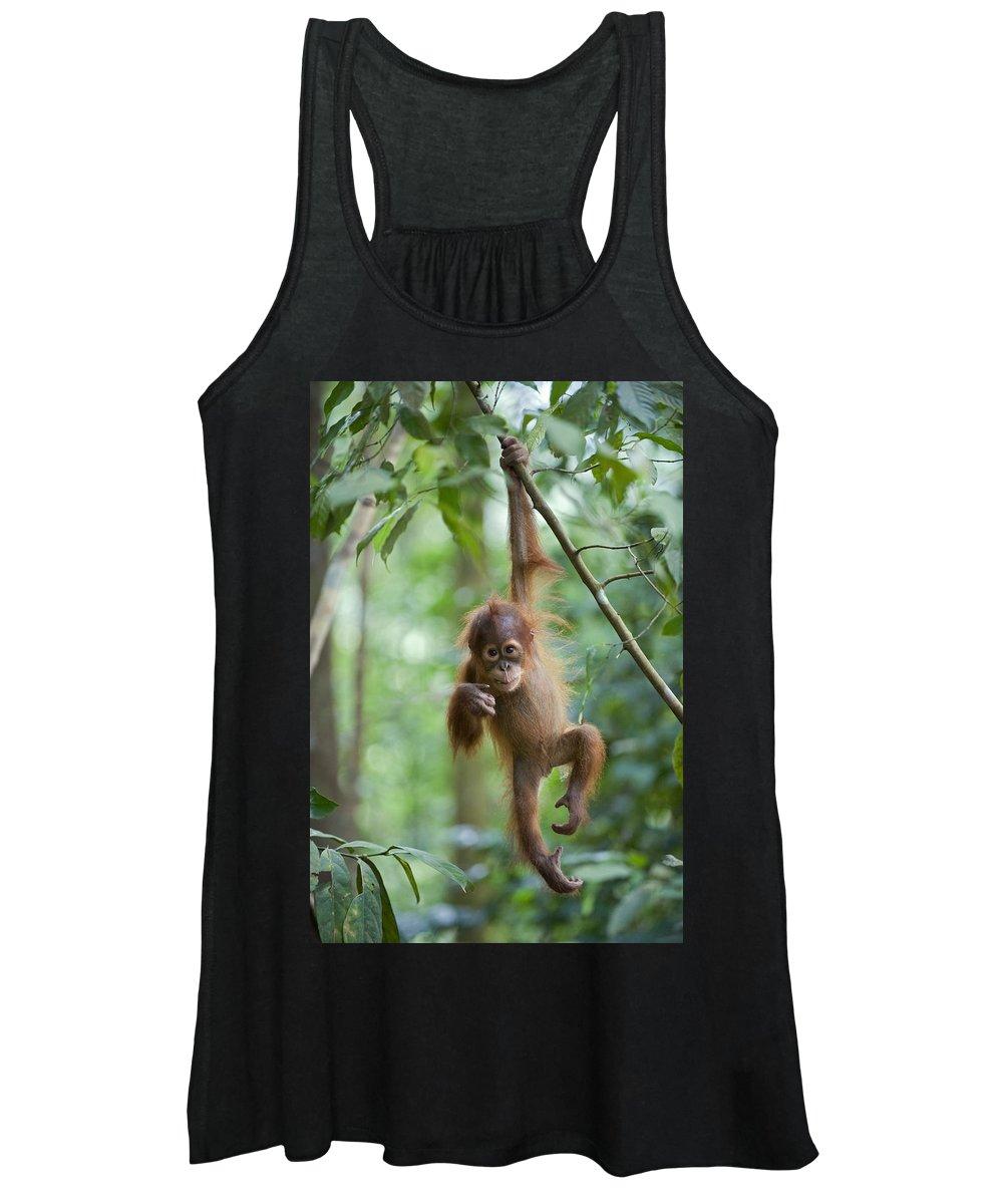 Mp Women's Tank Top featuring the photograph Sumatran Orangutan Pongo Abelii One by Suzi Eszterhas