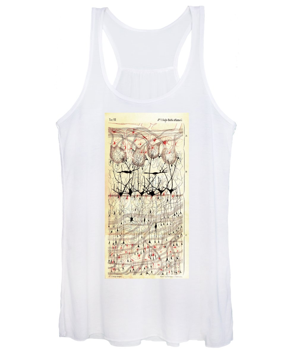 Golgi Women's Tank Top featuring the photograph Golgi Olfactory Bulb Of Dog by Science Source