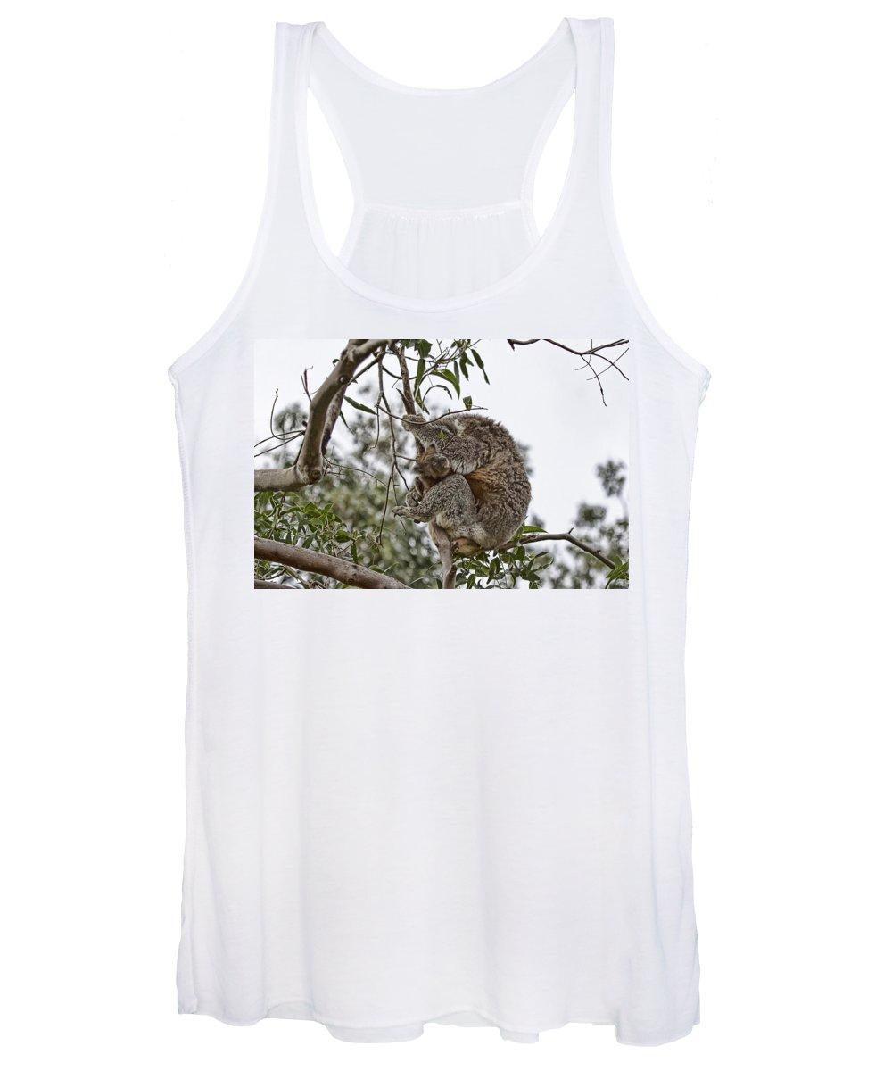 Baby Koala Women's Tank Top featuring the photograph Baby Koala by Douglas Barnard