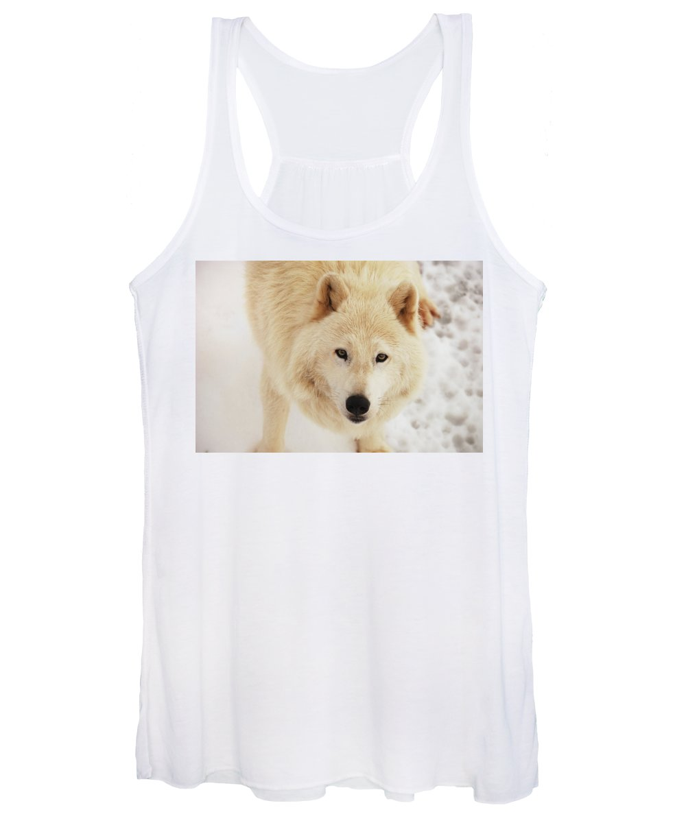 Arctic Wolf Women's Tank Top featuring the photograph Arctic Wolf by Curt Remington