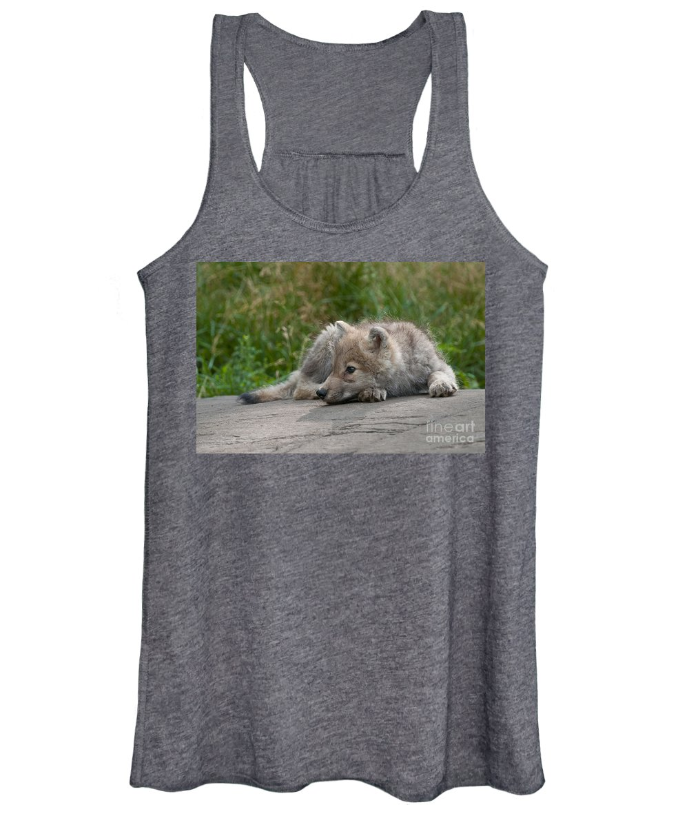 Arctic Wolf Photography Women's Tank Top featuring the photograph Arctic Wolf Pup Pictures by Wolves Only