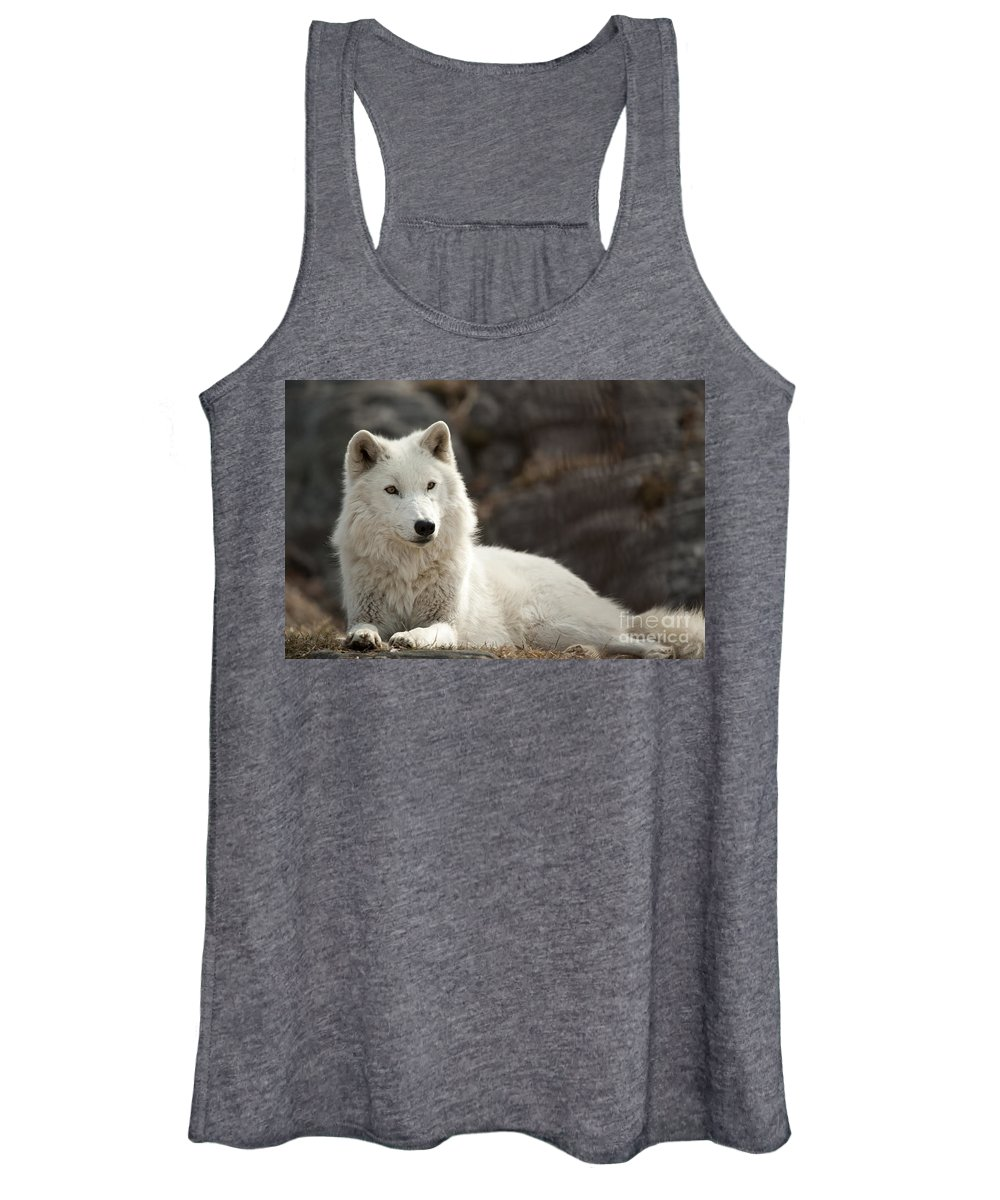 Arctic Wolf Photography Women's Tank Top featuring the photograph Arctic Wolf Adult by Wolves Only