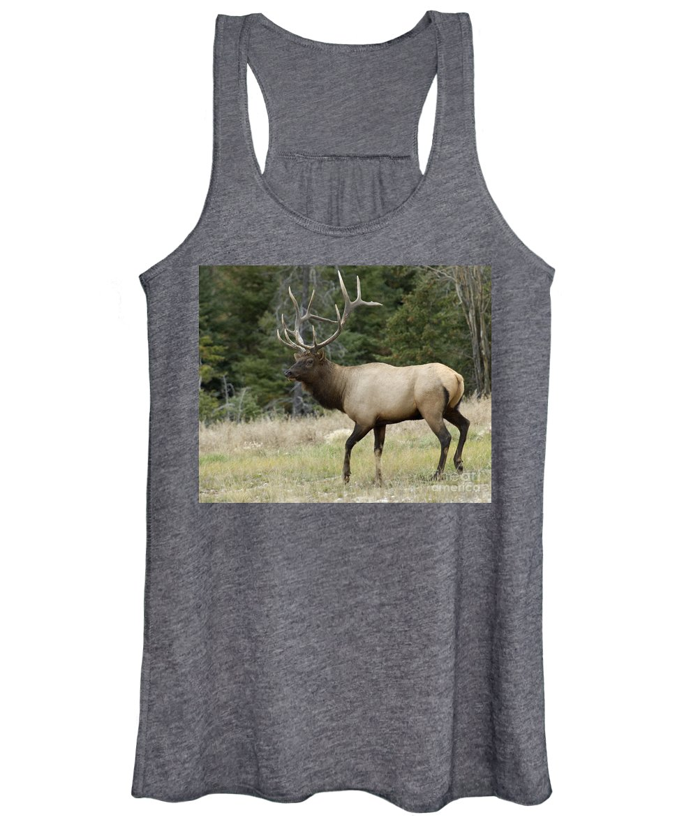 Elk Women's Tank Top featuring the photograph Mr Majestic by Bob Christopher