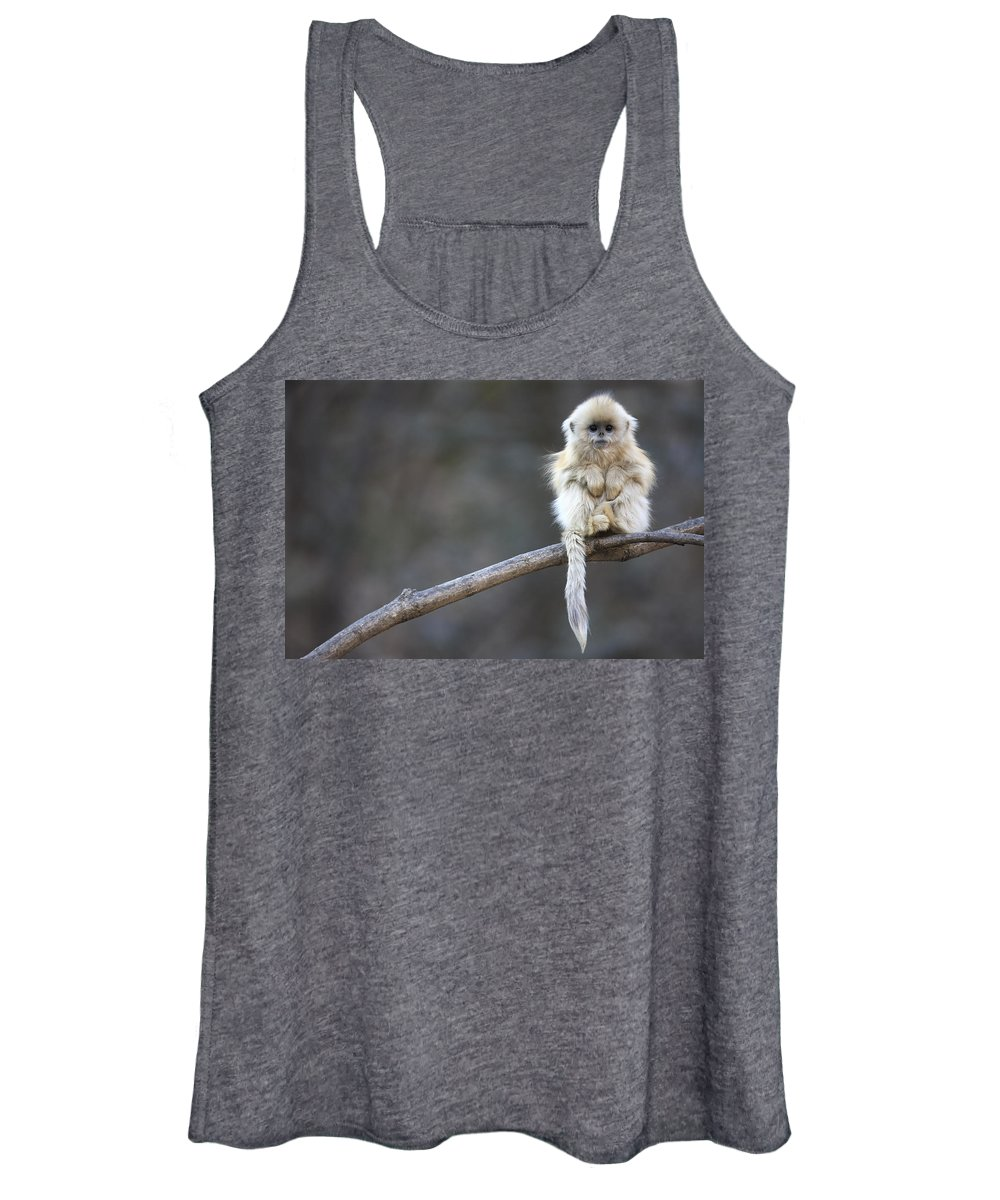 Mp Women's Tank Top featuring the photograph Golden Snub-nosed Monkey Rhinopithecus by Cyril Ruoso
