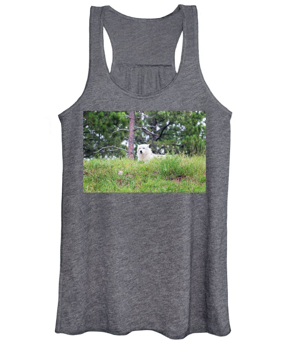 Arctic Wolf Women's Tank Top featuring the photograph Arctive Wolf Lying Down by Jess Kraft