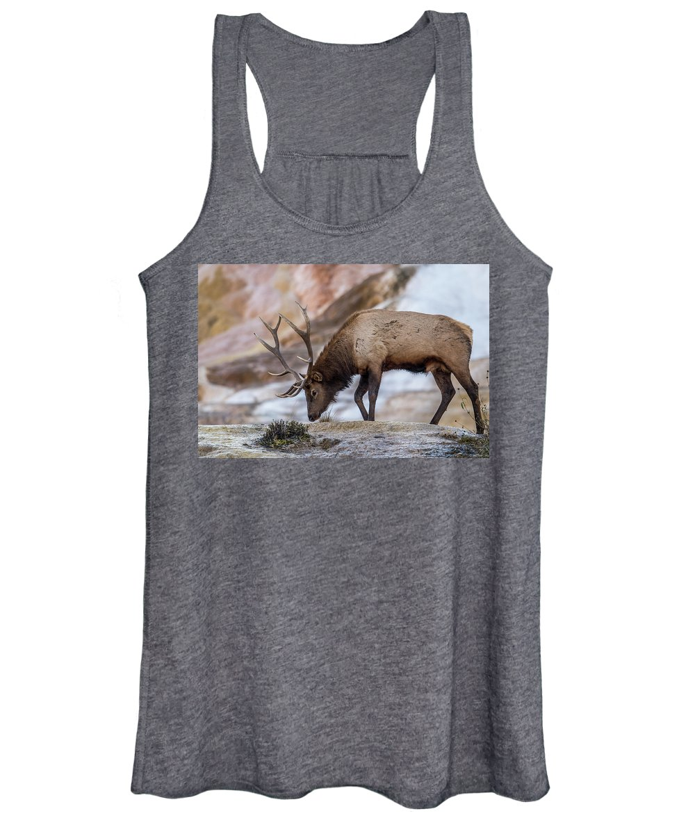 Elk Women's Tank Top featuring the photograph Elk In Yellowstone by Paul Freidlund