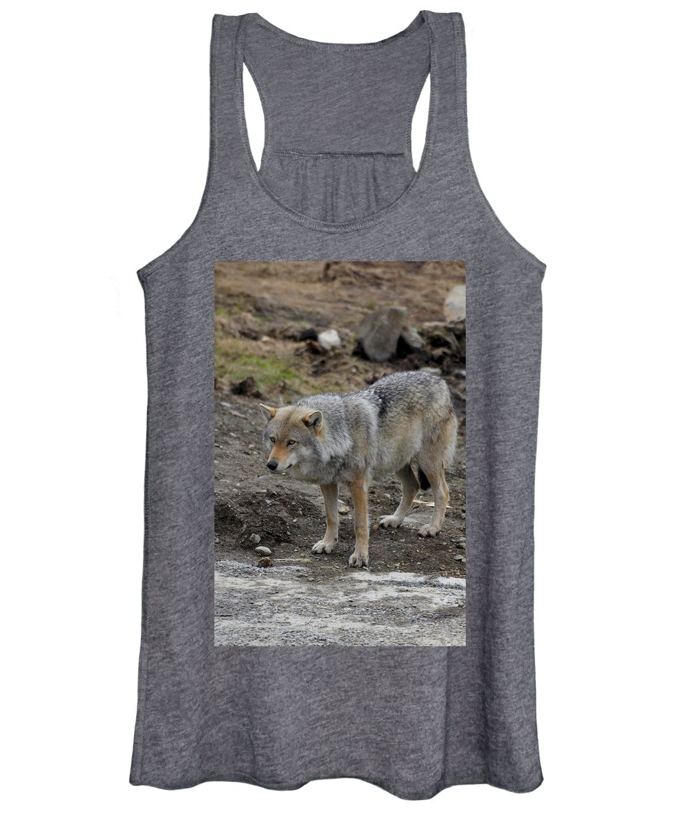 Wildlife Women's Tank Top featuring the painting Wolf 1 Norway by Robert SORENSEN