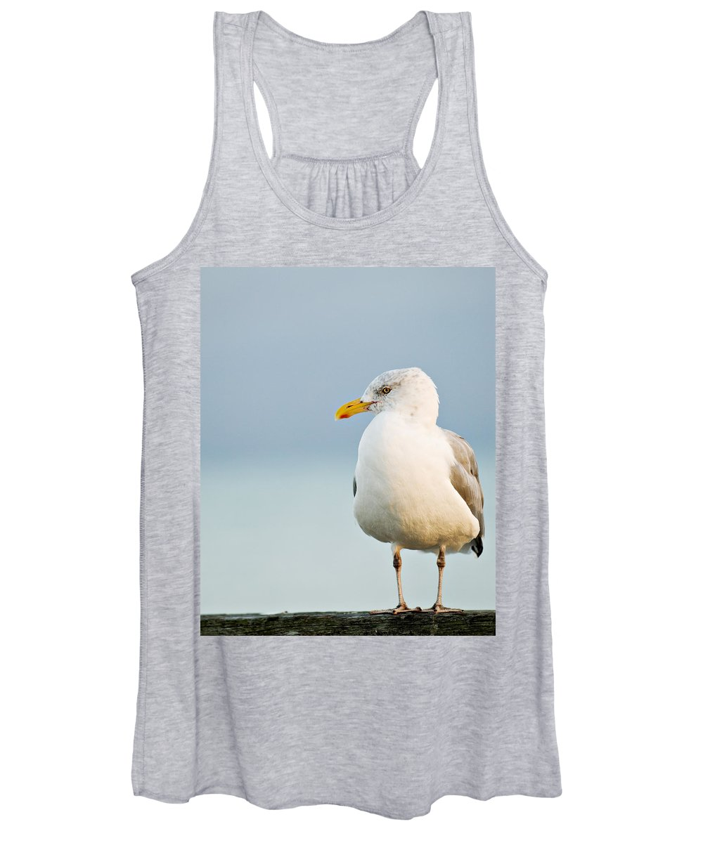 Seagull Women's Tank Top featuring the photograph Cape Cod Seagull by Renee Cline