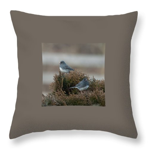 Junco Throw Pillow featuring the photograph 2 Juncos by Photos By Cassandra