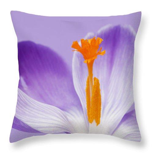 Crocus Throw Pillow featuring the photograph Abstract Purple Crocus by Gillian Dernie