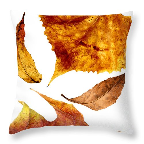 Autumn Throw Pillow featuring the photograph Autumn Leaves by Donald Erickson