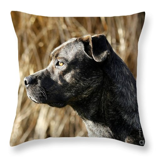 Watching Throw Pillow featuring the photograph Bullmastiff Dog Watching The Sunrise by Inspired Nature Photography Fine Art Photography