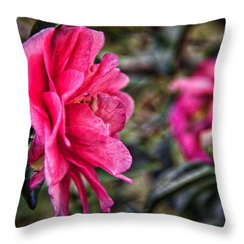 Flower Throw Pillow featuring the photograph Camellia De Mamie by Alice Gipson