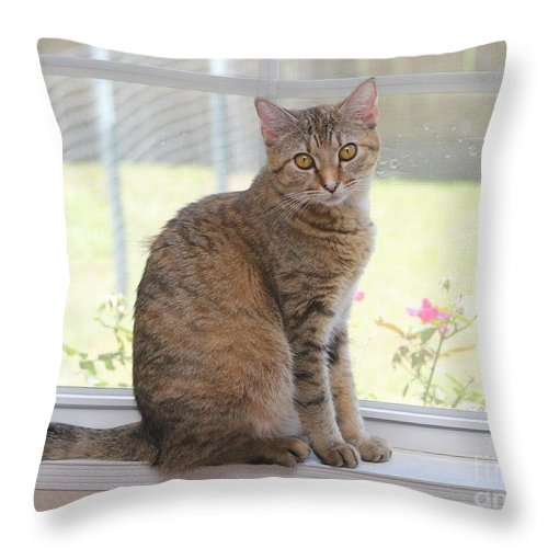 Cat Throw Pillow featuring the photograph Cat In The Window by Michelle Powell
