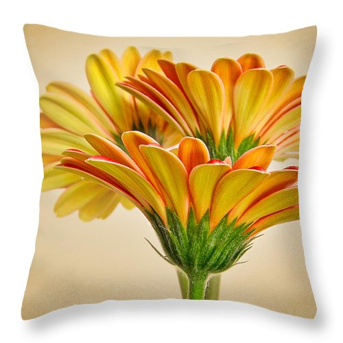 Daisy Throw Pillow featuring the photograph Daisies In Triplicate by David and Carol Kelly